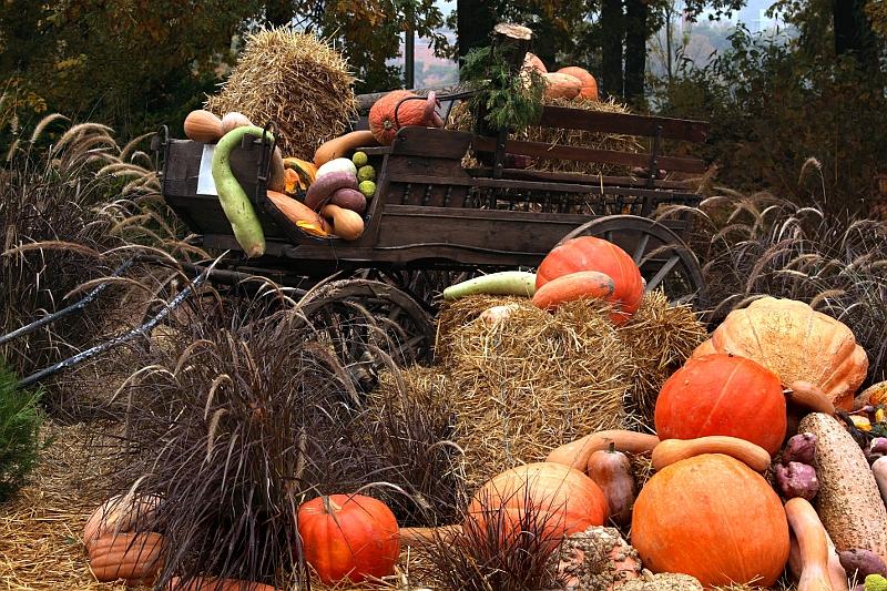Halloween: nature morte Hallo