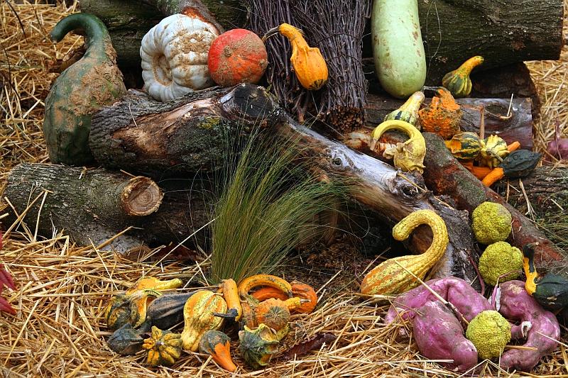 Halloween: nature morte Hallo2